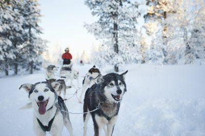 dogsled team